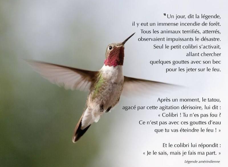 Top Légende amérindienne:le colibri – Michelduchaine QP07
