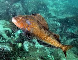 Fukushima threatens the world michelduchaine for Donne poisson