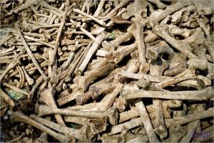 Plus de 70 ans après la bataille,on ramasse les os à la pelle.