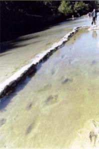 Préservées sous un lit d'eau,les traces sont restées intactes.