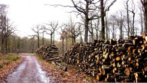 A partir du 8 avril 2014, les sénateurs français examineront le projet de loi d'avenir sur l'agriculture et la forêt (LAAF). Nos forêts ne seront bientôt plus qu'un joli souvenir si nous ne changeons pas le projet de loi actuellement discuté au Parlement. Bref,on discute du prix de la vie.