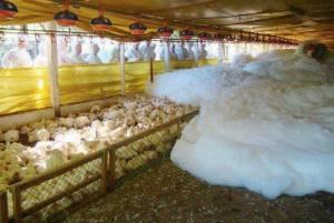Mousse pour tuer les poulets