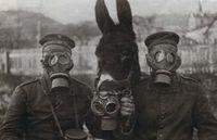 C'est en mai 1917 qu'apparut le masque à gaz pour cheval,dans l'armée allemande.