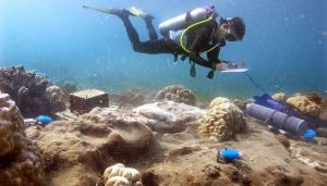 Récif malsain: Les données des dossiers Fabricius provenant d'instruments placés à côté des coraux dans les  larges évents de CO 2 près de l'île Dobu.