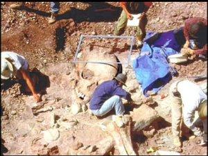 Géants crânes et ossemens 003