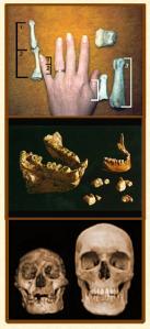 Les crânes et les ossements  de géants découverts ...eux,sont anciens.