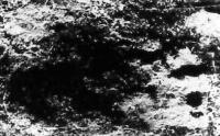 En 1984, le professeur Kourban Amanniazov, directeur de l'Institut de géologie de l'Académie des Sciences de Turkménie, a dirigé une expédition dans les montagne de Kouguitang-Taou au sud-est du pays. Parmi les nombreuses traces de dinosaures, ils ont trouvé également une empreinte, pas très nette mais assez distincte, vieille de 150 millions d'années, qui ressemble à la trace d'un pied d'humanoïde.