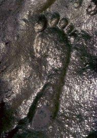 Ci-dessous à droite est l' « Empreinte maîtresse, » se trouvant dans l'Utah dans un bloc de schiste. Il a d'abord été publié dans le SIR trimestriels que l'empreinte de pied contenait un fossile trilobite. En bas à gauche est une seule chaussure fossilisée trouvée pétrifiée dans la roche du Trias.Ce modèle d'impression est tellement clair que les fils sont visibles à l'œil nu! Également publié dans cette revue est l'étude de 1995 de quasihuman ichnofossils (supposée de l'homme morceaux) trouvée avec des straces de dinosaures dans les couches près de Tuba City, Arizona.