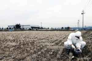 Greenpeace nuclear campaigner Nikki Westwwod samples soil to test for contamination on the outskirts of Fukushima City, 60 km from the stricken Fukushima Daiichi nuclear plant. Greenpeace is working in the area to monitor radioactive contamination of food and soil to estimate the health and safety risks for the local population.