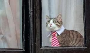 toujours-prive-dinternet-julian-assange-sennuie-et-deguise-son-chat